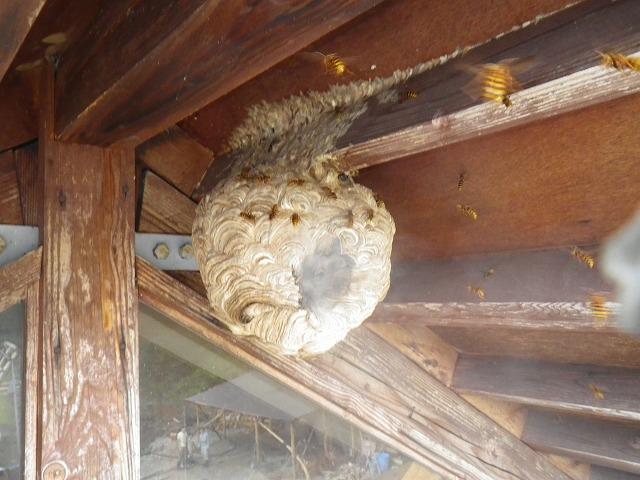 スズメバチ 屋根裏