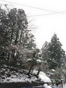 三楽園 雪