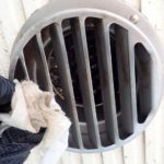 コウモリ侵入口封鎖作業! 2020年6月2日 富山県射水市